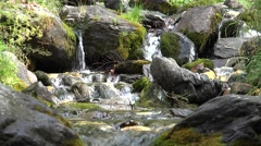 4K Water Fall Brook in Mountains, Summer Sunny Day in Forest, Wood River View Stock Footage