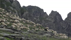 Stock Video Footage of 4K Sheep in Mountains, Flock of Lambs Grazing on the Hill, Pastoral Autumn View