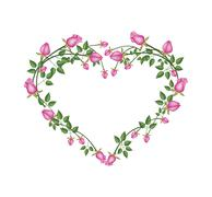 Beautiful Pink Roses Flowers in Heart Shape - stock illustration