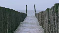 Motor Boat Yacht Passing Seagulls On Wooden Beach Poles - 25FPS PAL - stock footage