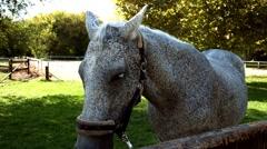 Silver horse closeup - stock footage