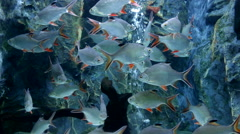 Activity of fishes Stock Footage