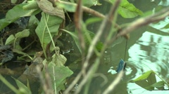 CLOSE UP: HANDMADE FISHING POLE AND BOB IN RIVER WATER Stock Footage