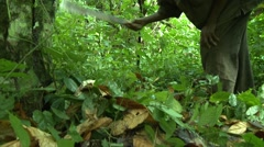 CLOSE UP: PAKRO FARMER CLEARING BRUSH WITH MACHETE - stock footage