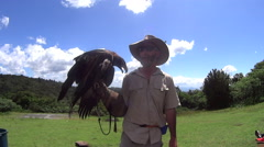 Bird Handler With Eagle Stock Footage