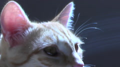 Red cat head Stock Footage