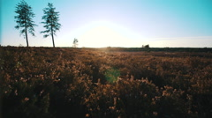 Sunset with two pine trees Stock Footage