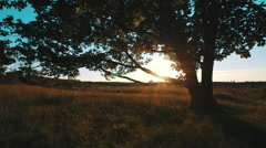 Sunset trough leaves of old oak with heath flying over branch Stock Footage