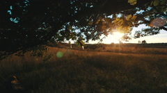 Sunset trough leaves of old oak with heath in golden glow Stock Footage