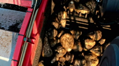 Sugar beet in agricultural machinery - stock footage