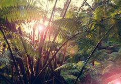 Jungle Kuvituskuvat
