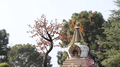 Tree on the background of stupa in the Kopan monastery Stock Footage
