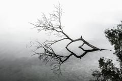 Fallen tree in lake - stock photo