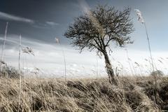 Tree on grassy field Stock Photos