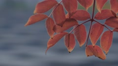 Pull focus from autumn leaves to jewish holocaust memorial - stock footage