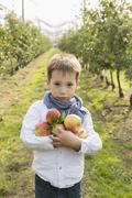 Portrait of cute boy holding apples at orchard - stock photo