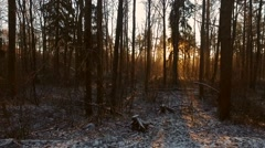 sunset in the winter forest - stock footage