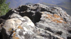 Mountain wood in the foreground a stone Stock Footage