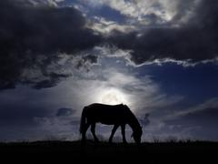 Pasture in the moonlight - stock photo