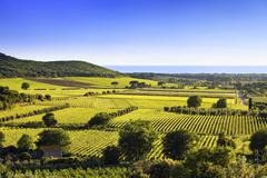 Bolgheri and Castagneto vineyard and Elba island. Maremma Tuscany, Italy Stock Photos