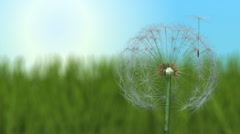 Dandelion and Seeds in Breeze Stock Footage