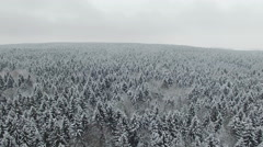 4K. Flight above winter forest on the north, aerial panoramic view. - stock footage