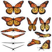 monarch butterflies - stock illustration