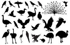 Stock Illustration of bird silhouettes