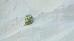 Hermit crab crawling on the sand Stock Footage