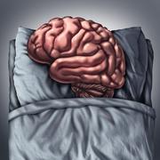 Brain Sleep Piirros