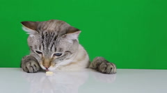 Funny cat sitting at the table and licks treat. Slow motion - stock footage