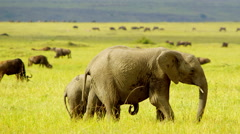 Elephant with baby in Wildlife Stock Footage