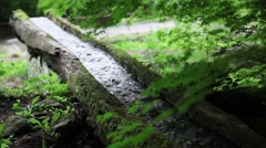 Water stream in the forest Stock Footage