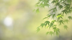 Green leaves - stock footage