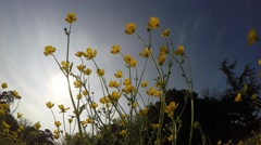 Yellow flowers shaken by the breeze - stock footage