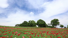 Flower field in the countryside Stock Footage