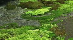 Kakita River, Shizuoka Prefecture, Japan Stock Footage