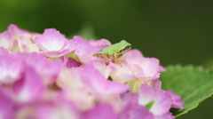 Frog on a flower Stock Footage