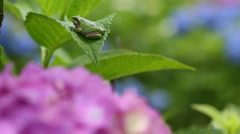 Frog on a leaf Stock Footage