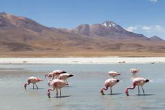 Flamingos on Laguna Hedionda - stock photo