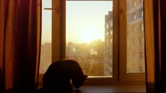 Young woman uses mobile phone relaxing with her lovely Maine Coon cat at window Stock Footage