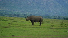 Rhino in 4k Stock Footage