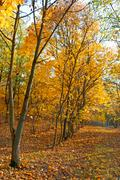 Falling leaves in autumn forest Stock Photos