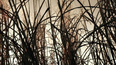 Dry winter grass on wind - stock footage
