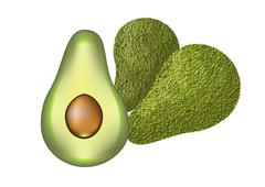 Stock Illustration of avocado