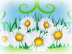Daisies and ribbon Stock Illustration