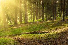 North scandinavian forest - stock photo