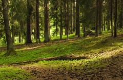 Stock Photo of North scandinavian forest