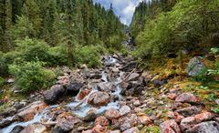 Mountain stream running in the narrow forest gorge - stock photo