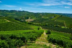 Chianti vineyard landscape - stock photo